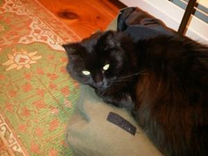 gretchen-cat