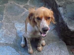 lamuse-dog