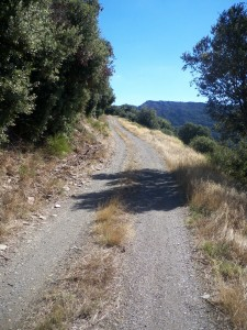 lamuse-road